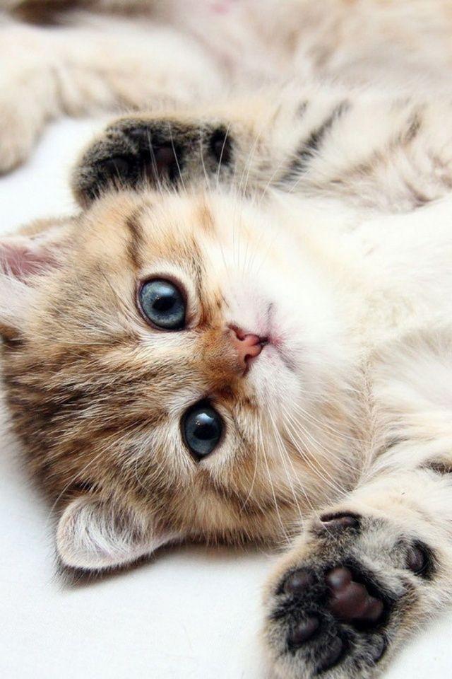 Cute Kittens Mobile Wallpaper Mobiles Wall Cute Cats Photos