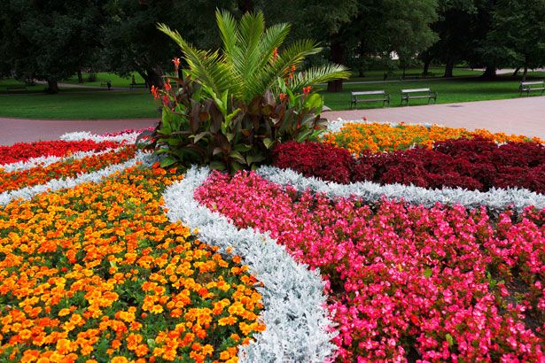 Flower Bed In The Park Free Stock Photo (With images ...