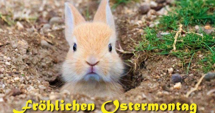 Blog mit schönen neuen Osterbildern und Ostergrussbildern für Eure Ostergrüß...,  Blog mit schönen neuen Osterbildern und Ostergrussbildern für Eure Ostergrüß...,