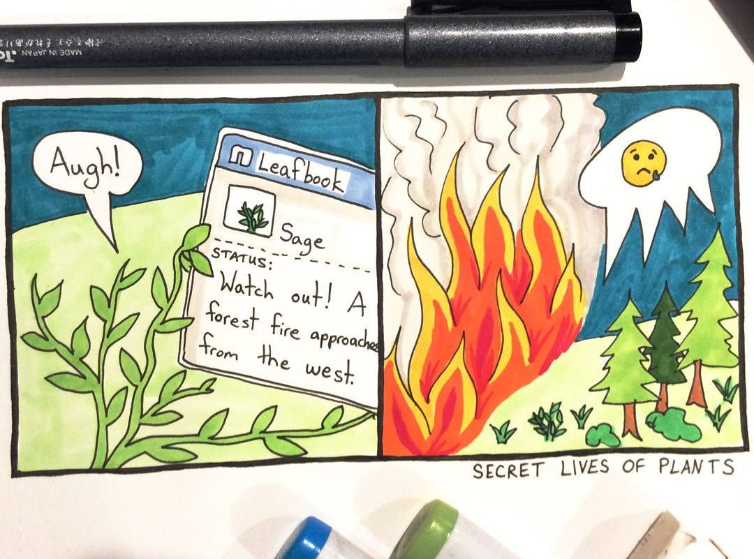 Day #17 of #SecretLivesOfPlants. Wishing safety for all those impacted & the firefighters. #LomaFire