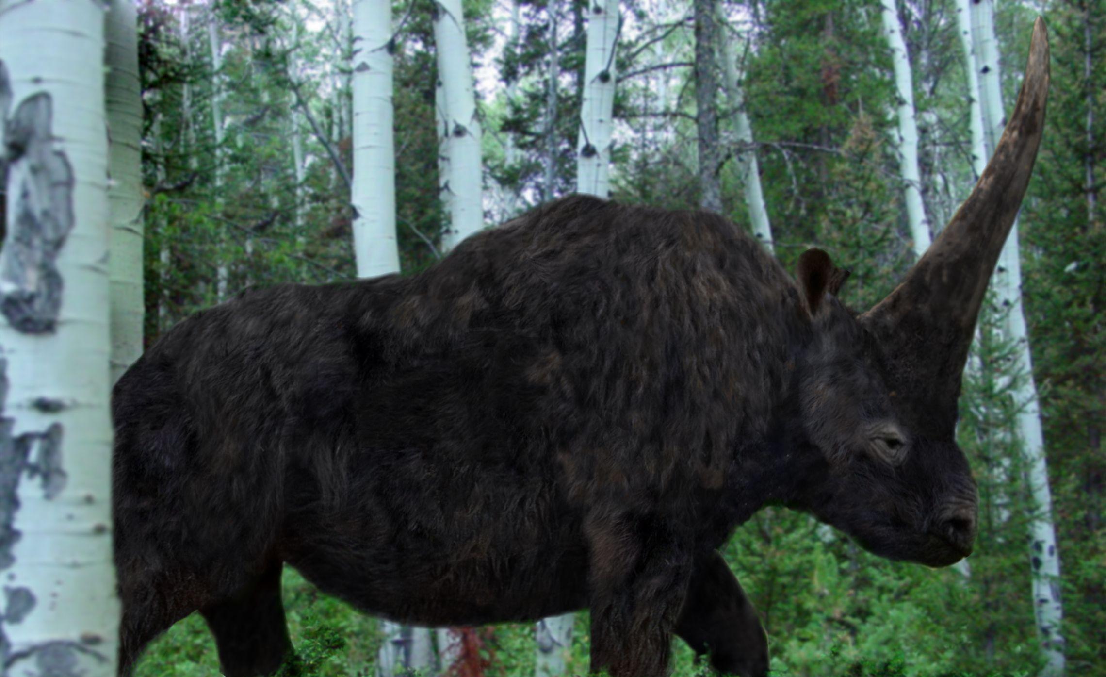 Recreation of the Elasmotherium, went extinct 50,000 years