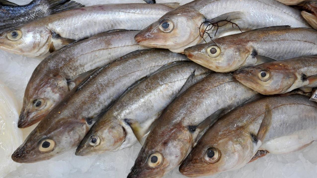Pêche plus d'un tiers des poissons attrapés en France