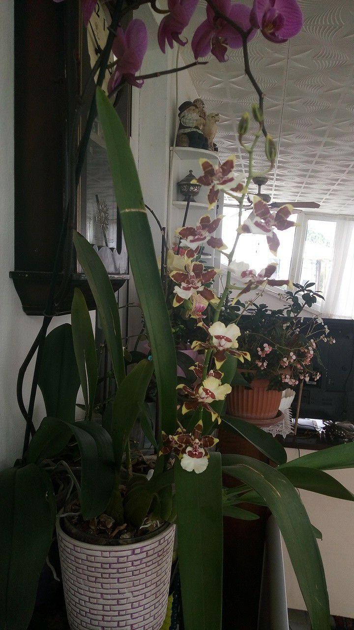 Orkide Bakımı Nasıl Yapılır