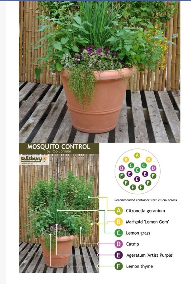 Mosquito Repellent Planter Summer Get Togethers