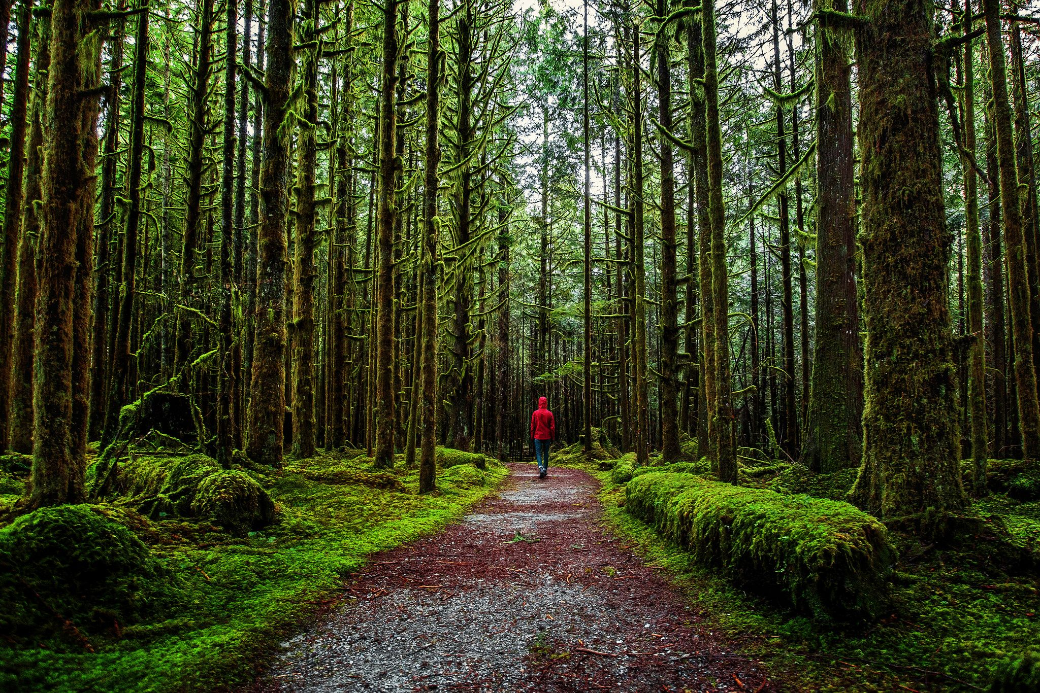 Into The Northwest Travel Outdoors Landscape Park Forest