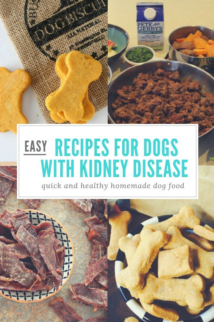 Feeding a dog with kidney disease dog kidney disease