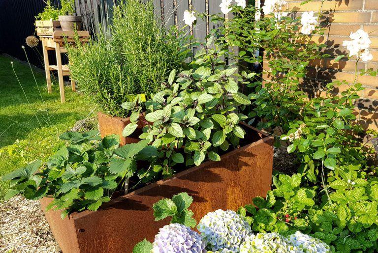 Kräuteranbau, Pflege und Ernte – grüneliebe.de   – Gemüsegarten