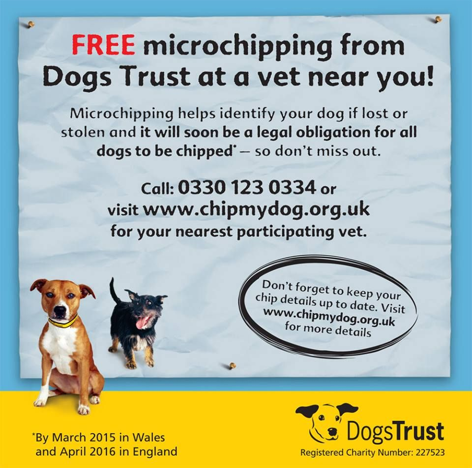 Don T Forget Free Microchipping Is Now Available From Dogs Trust At A Vet Near You