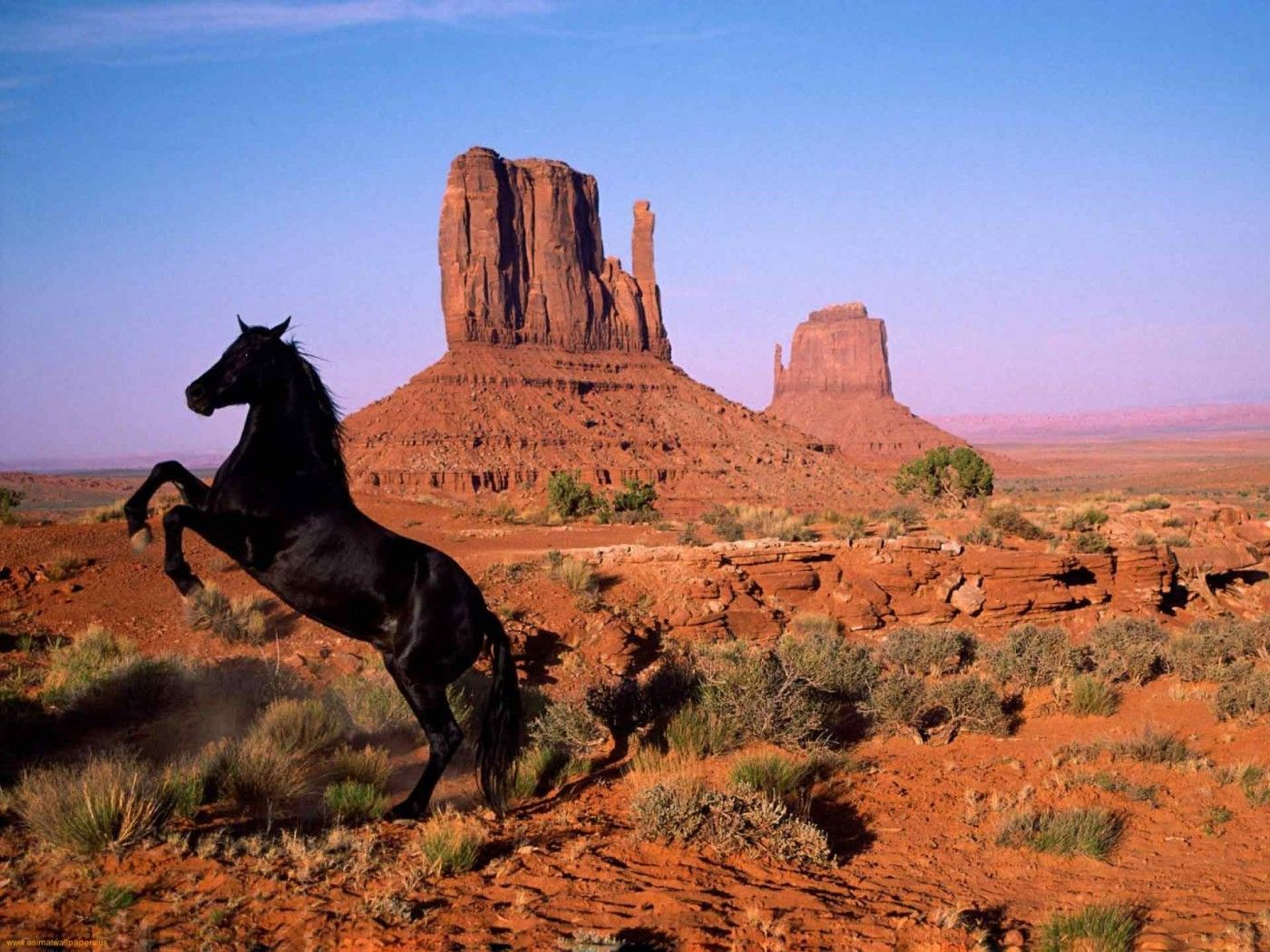 Good Wallpaper Horse Desert - 989d37f61a7478dc6de8473178fee9b0  Pictures_91981.jpg
