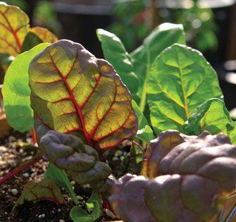 Fall Garden Planning - Eat Healthy - Natural Home & Garden
