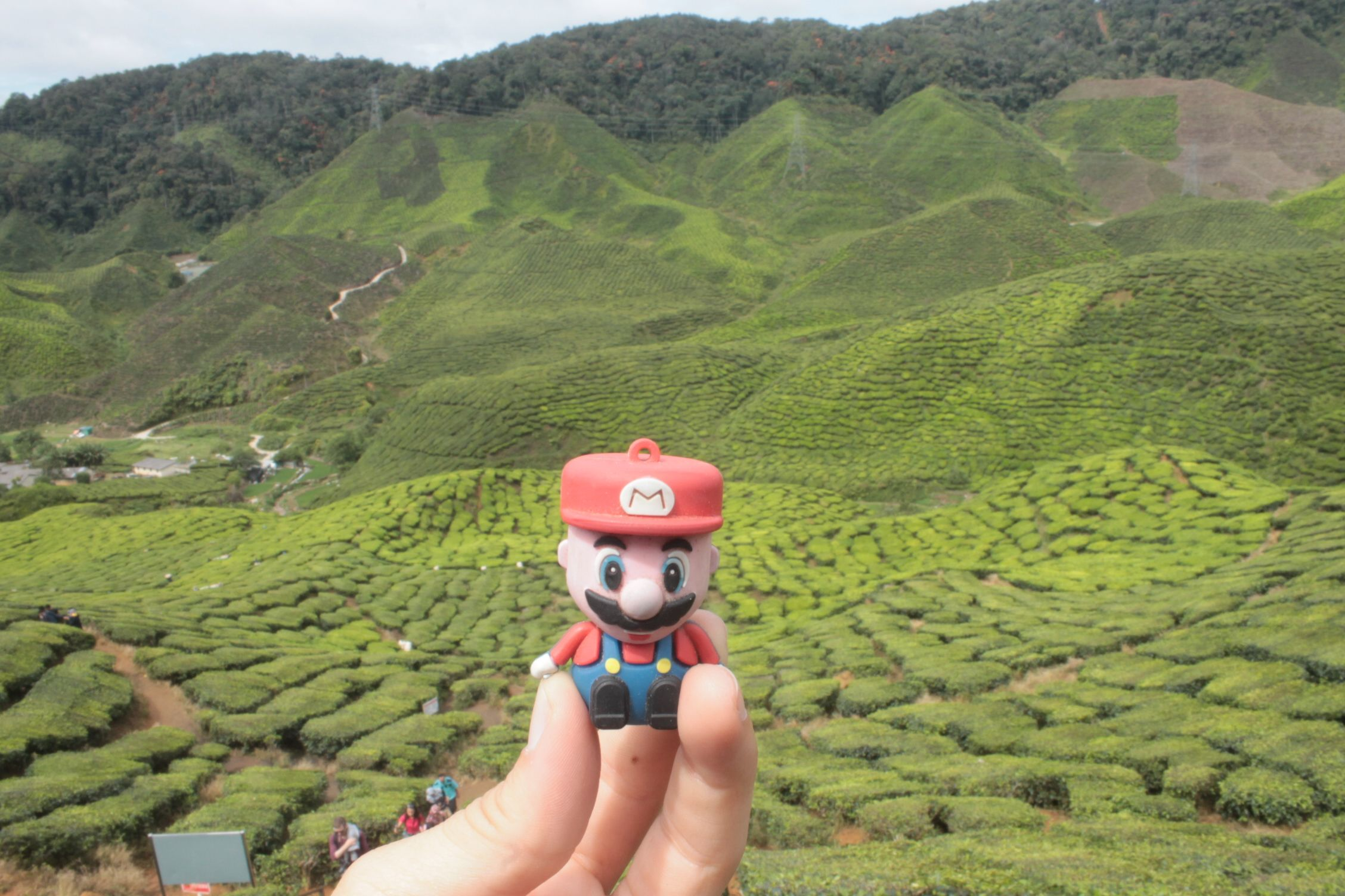 En las plantaciones de te de Cameron Highlands