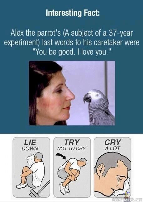 alex the parrot last words