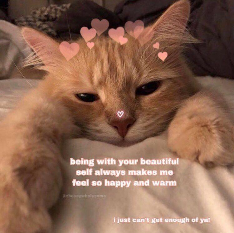 Katzen Meme