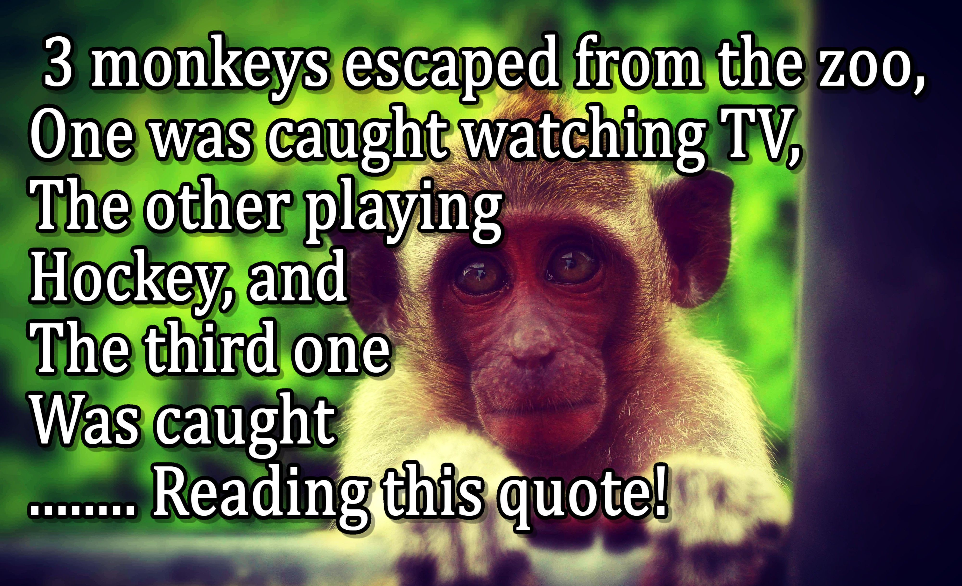 3 Monkeys Escaped From The Zoo One Was Caught Watching Tv The Other Playing Hockey And The Third Animal Quotes Quotes Catch