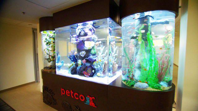 Petco Fish Tank With Fish Snakes Fish Tank Aquarium Fish Petco