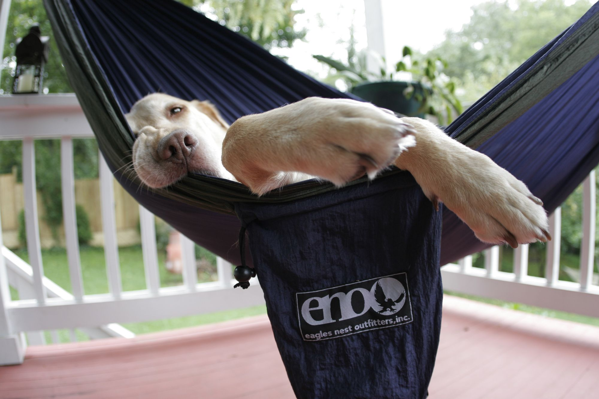 Thanks to @ENO Hammocks for donating a SingleNest+SlapStrap to our auction! If you #win, we hope your pup lets you share! #relaxwitheno