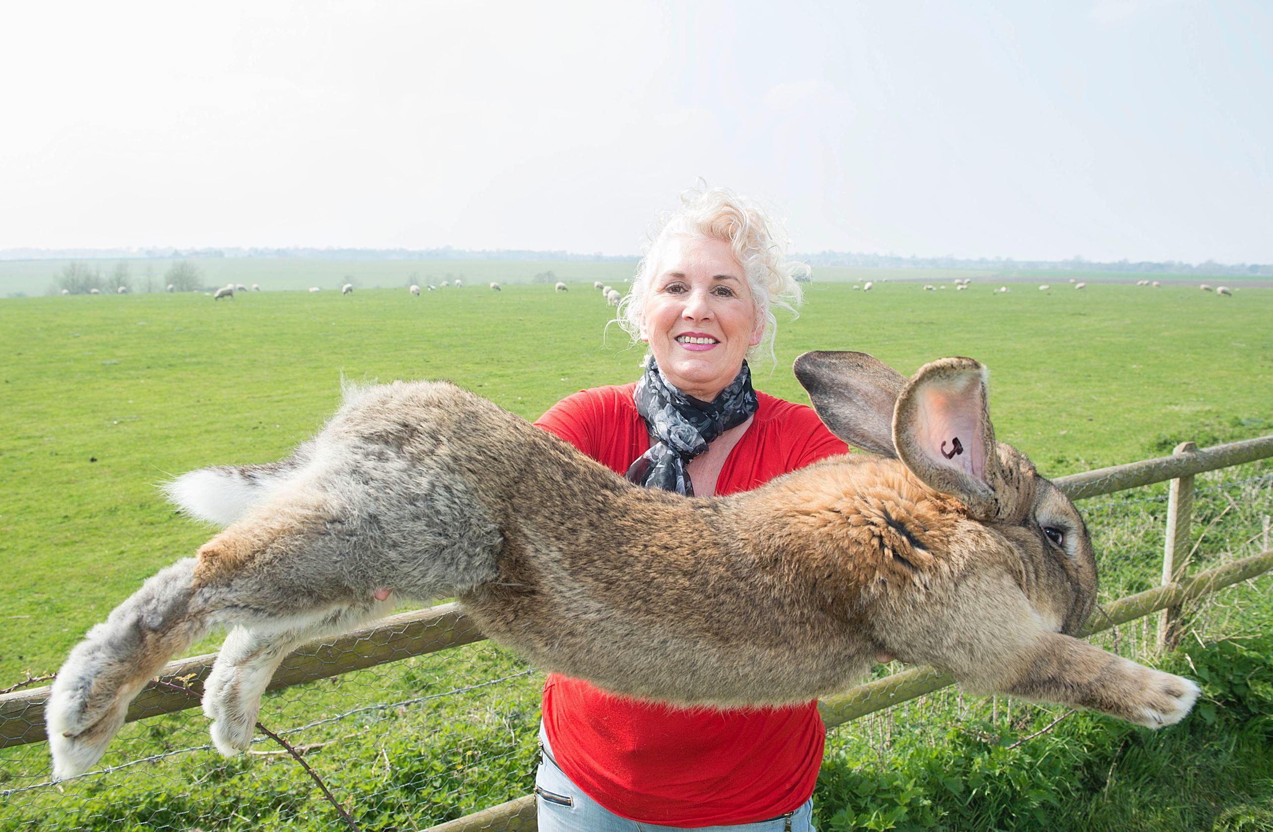 фото самого большого кроля породы