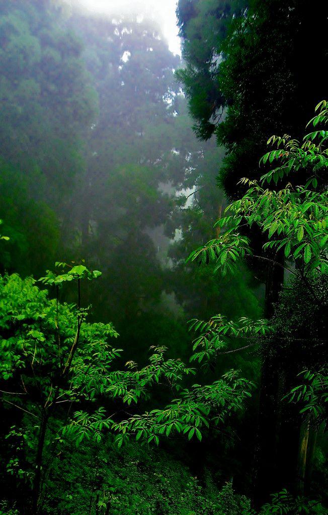 Serene Darjeeling