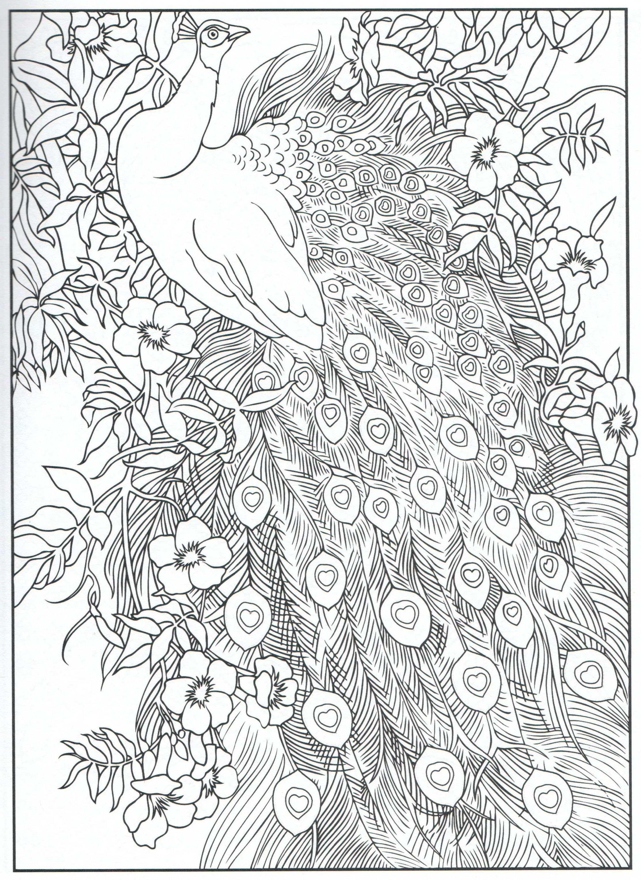 Peacock Feather Coloring pages