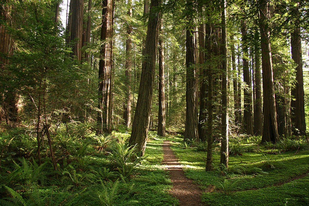 Avenue Of The Giants Northern California Usa Wallpapers Humboldt Redwoods State Park State Parks Redwood