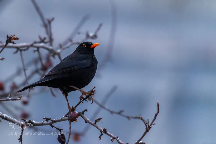 On the watch by PictureTheFuture #nature