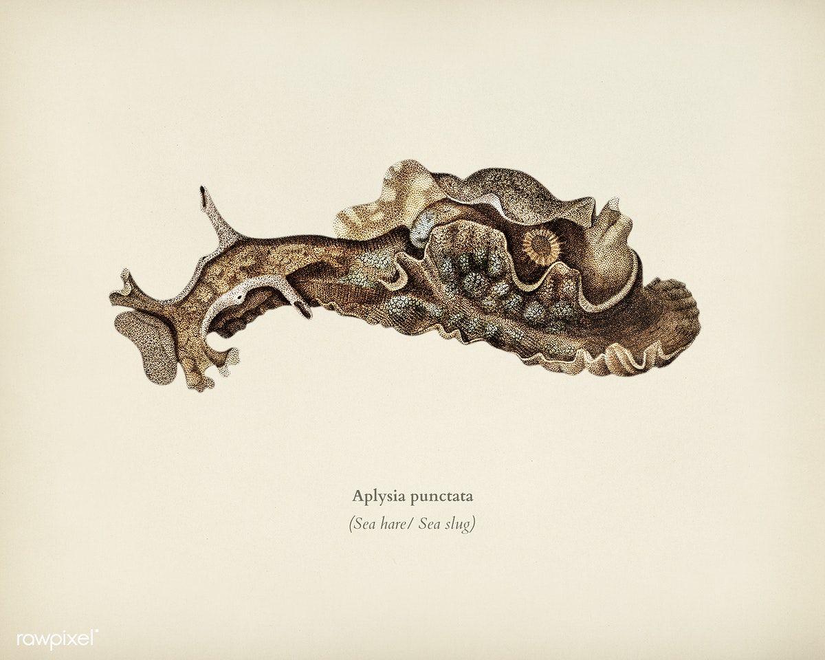 Digital Download Underwater Photography Printable Poster Minimalist Fine Art Nudibranch Seaslug