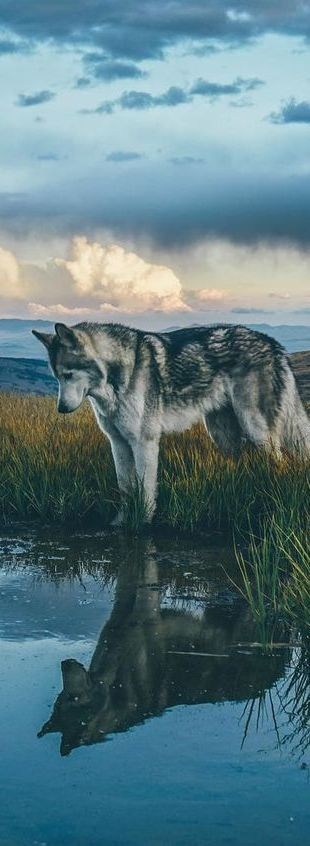 Ein hervorragendes Beispiel für die Verwendung von Licht in reflektierenden Oberflächen mit einem Hauptmotiv – dem Hund. Ich werde mehr über die Verwendung von Themen erforschen müssen. Vielleicht Tiere, Gegenstände oder sogar Menschen. – Education