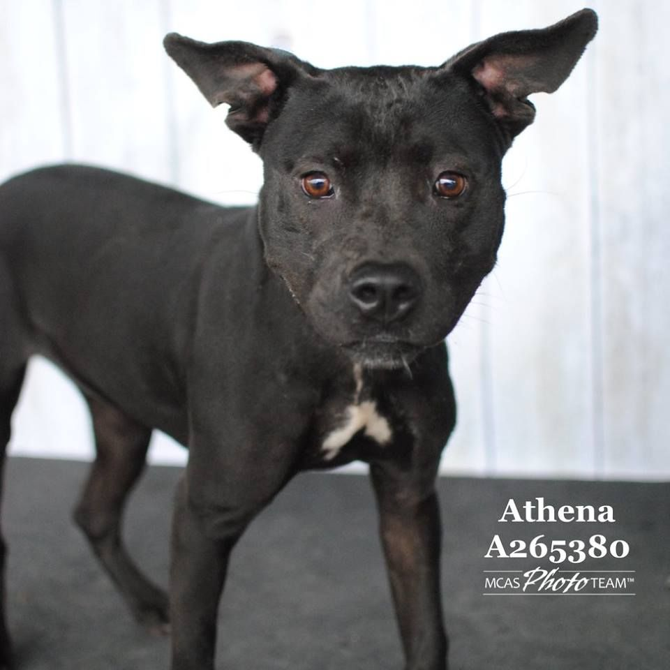 Adoptable dogs 2 montgomery county animal shelter texas