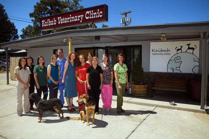 Kaibab Veterinary Clinic 1000 E Butler Ave Ste 101 Flagstaff Az 86001 928 774 8731 Veterinary Clinic Animal Hospital Vets