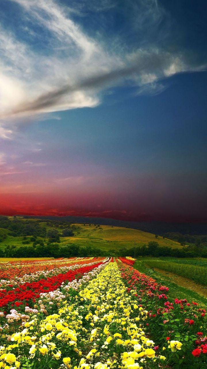 720x1280 magical beach gras hills ocean galaxy s3 wallpaper - Download Wallpaper 720x1280 Sunset Field Flowers Landscape Samsung Galaxy S3 Hd Background