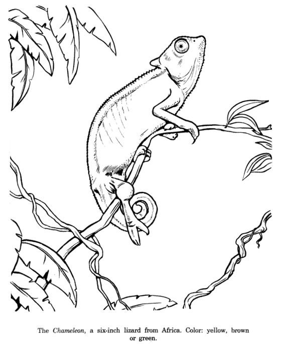 Pin By Nadia Wendel On Preschool Ideas Animal Drawings Animal Line Drawings Animal Coloring Pages