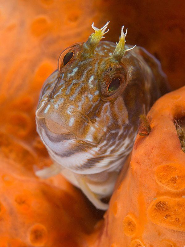 Goby, Chowder Bay by Doug Anderson