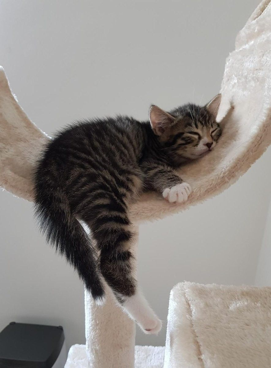 Pin By Alex Brownstein On Zonked Silly Cats Kittens Cutest