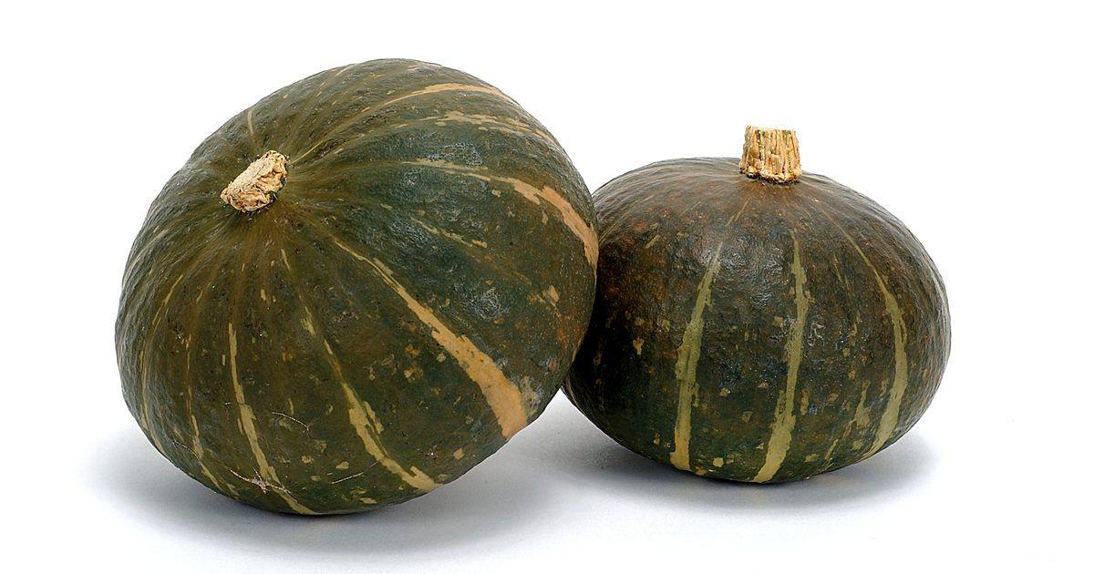 Cómo Cultivar Calabaza Vertical En Un Espacio Pequeño Pumpkin Vine Squash Plant Growing Pumpkins