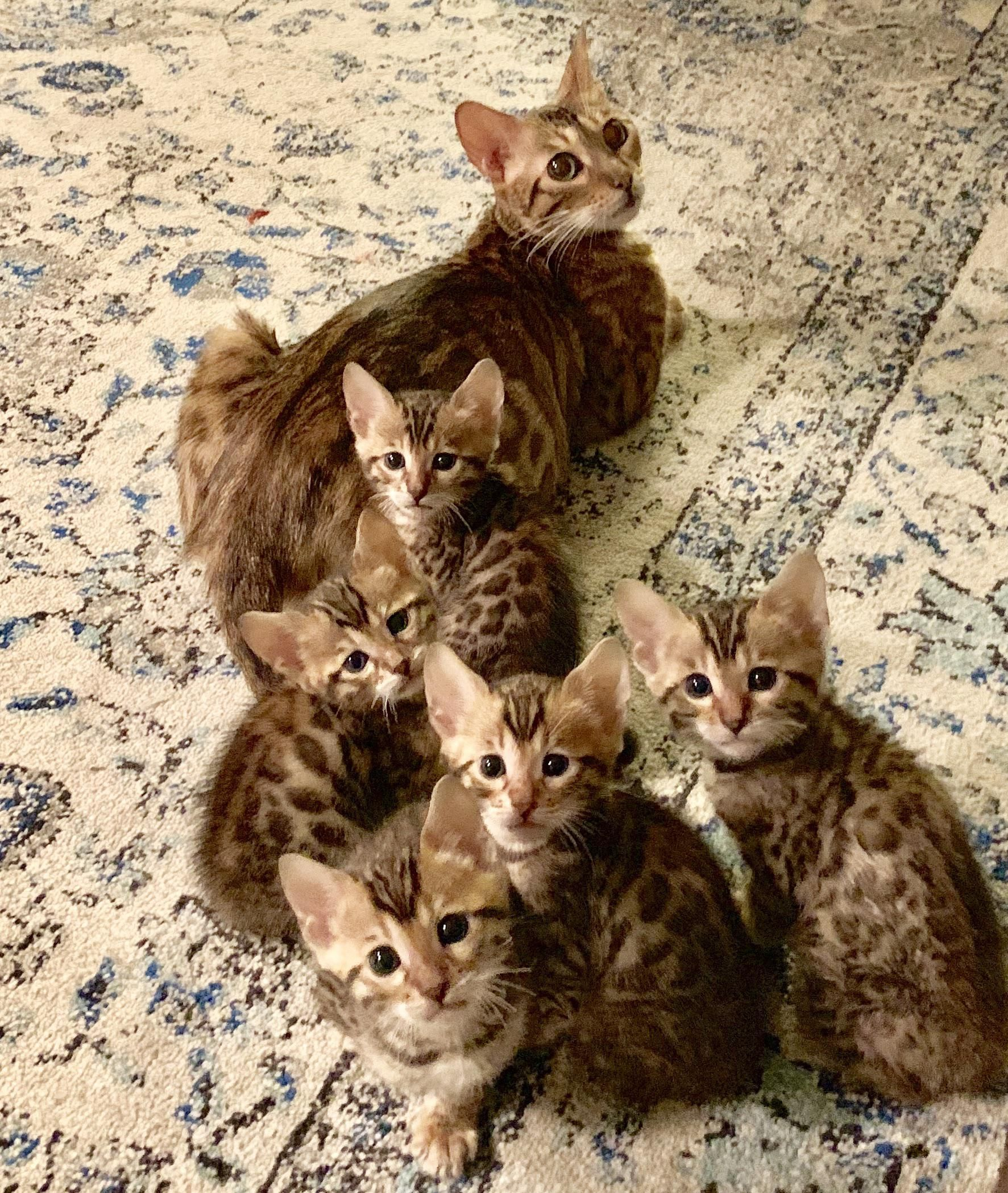 Mamma Brought Her Babies Downstairs For The First Time Tonight Those Faces Cute Cats Cute Baby Animals Kittens Puppies