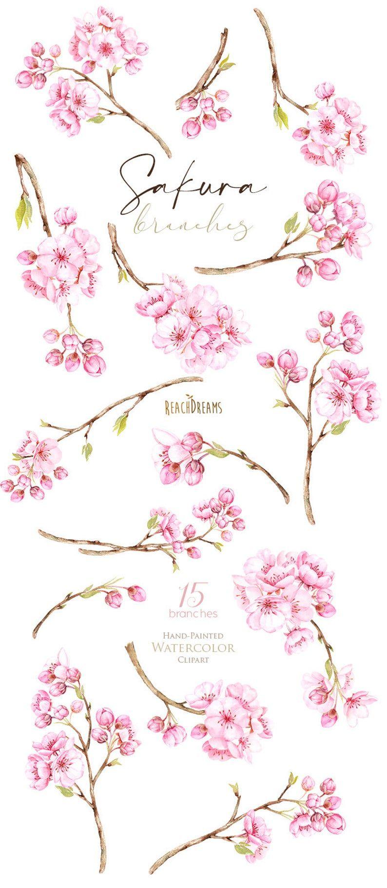 Sakura Branches Watercolor Floral Clipart Cherry Blossom Etsy Cherry Blossom Watercolor Cherry Blossom Drawing Floral Watercolor