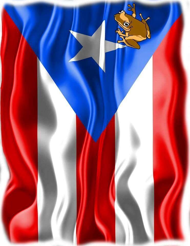 Coqui On Puertorican Flag Puerto Rico Art Puerto Rico Puerto Rico Pictures