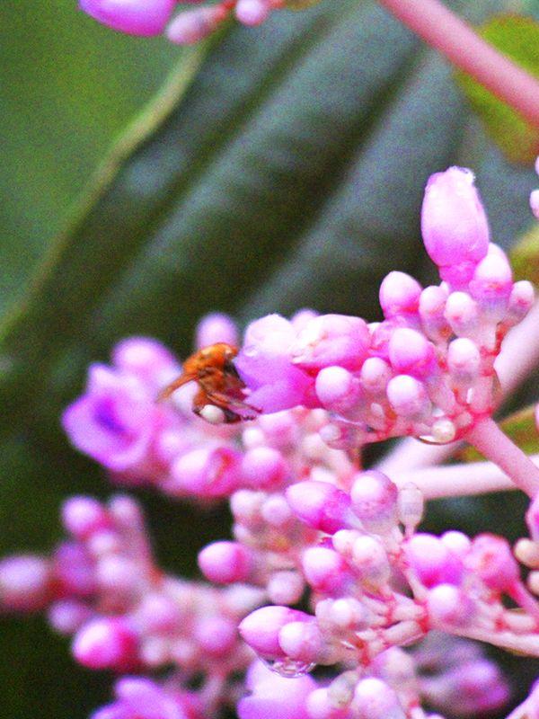 En #ArasháResort podrás apreciar infinidad de #insectos y #plantas, ven y conócelos.