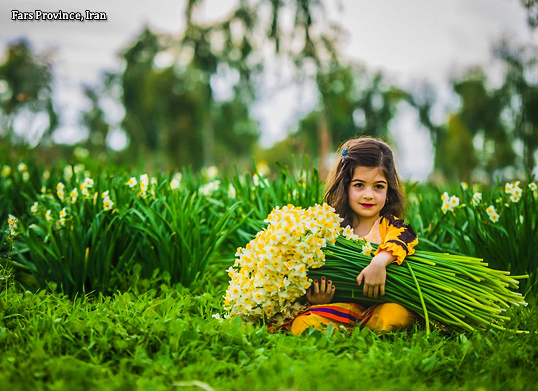Enjoy the aroma of beautiful narcissus in Shiraz, Fars