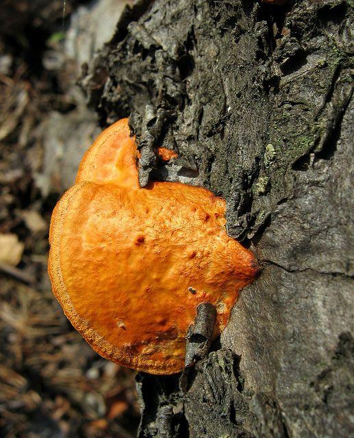 Värikäs kääpä maapuulla. https://www.flickr.com/photos/tietoukka/2441272609/