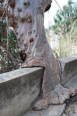 Trees Eating Things More Amazing