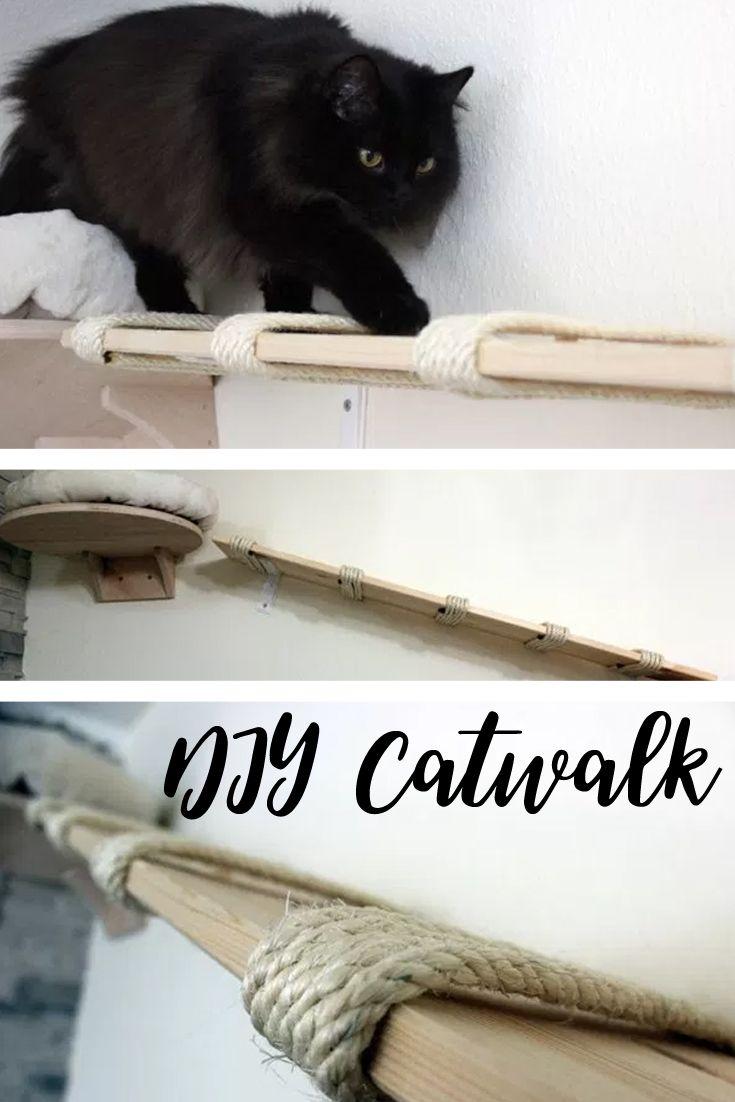 pin von deanna bishop auf my pets katzen katzen wand. Black Bedroom Furniture Sets. Home Design Ideas