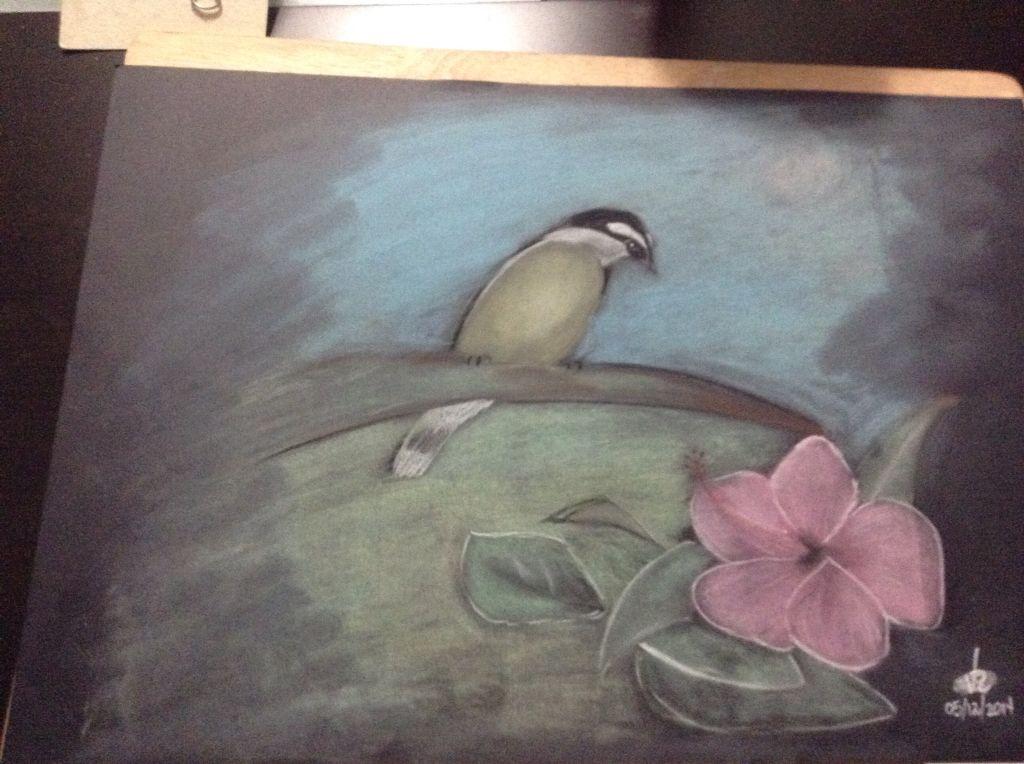 Pajaro Tecnica Pastel Cartulina Negra 50x35 Painting Pastel Painting Art