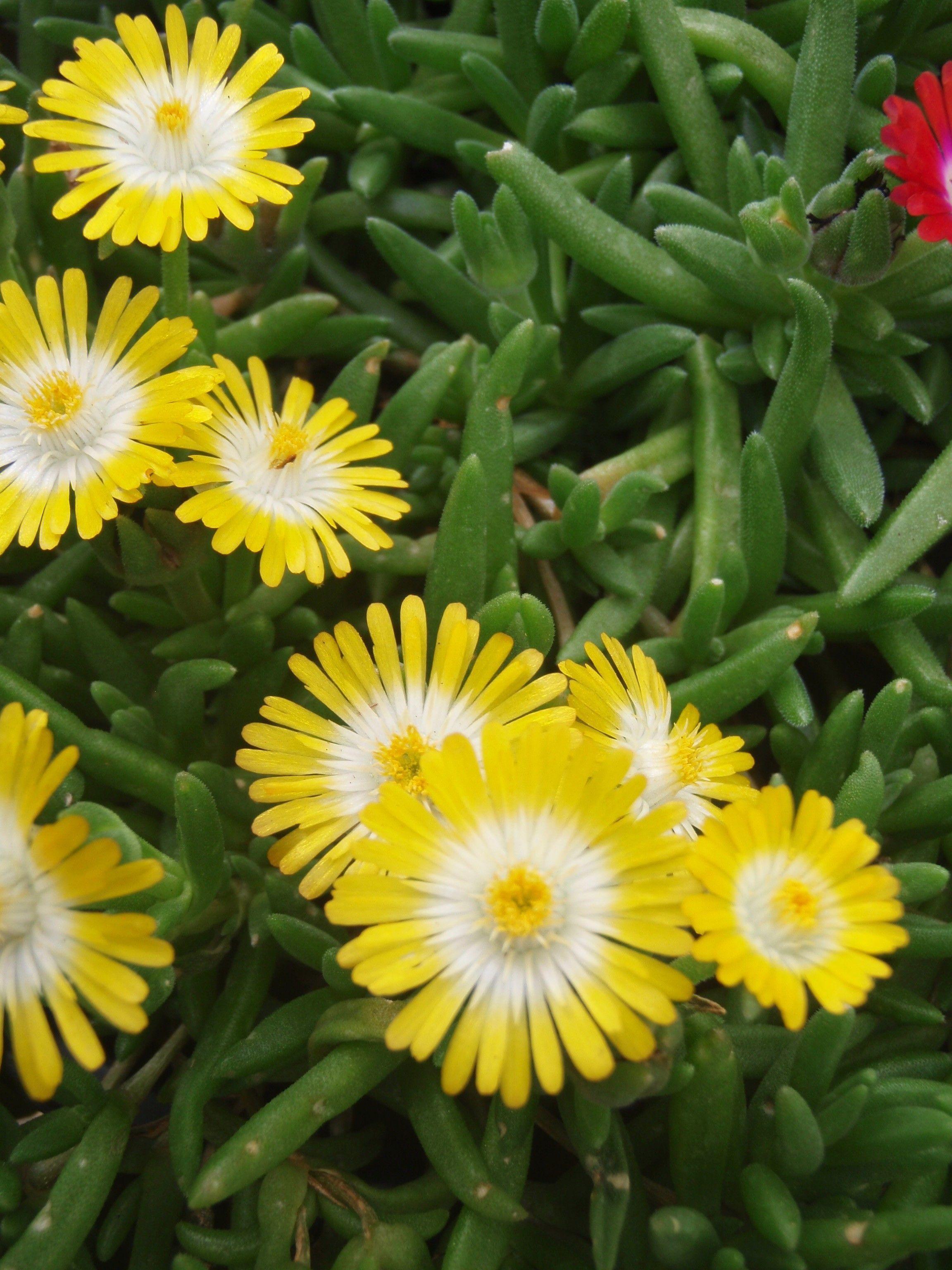 Tiny Yellow Flowers My Photos Pinterest Yellow Flowers