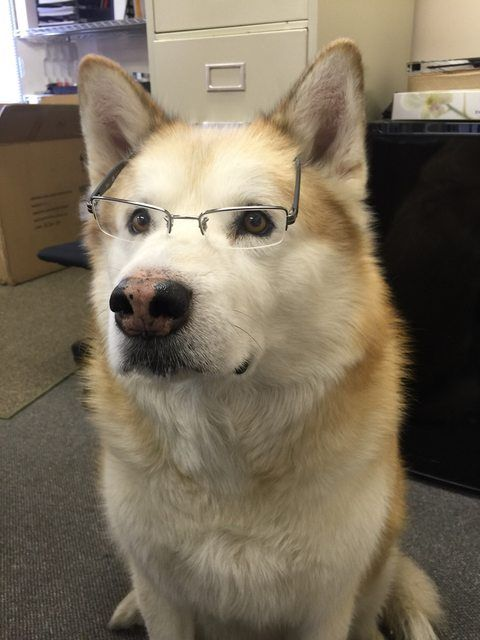 My Dog Gets To Come To Work With Me Now He S Trying To Fit In Dogs
