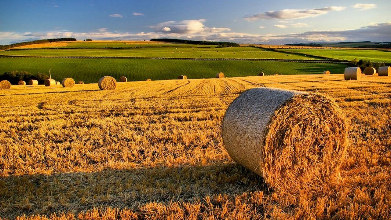 ما معنى الحصاد Scotland Organic Olive Oil Farming System
