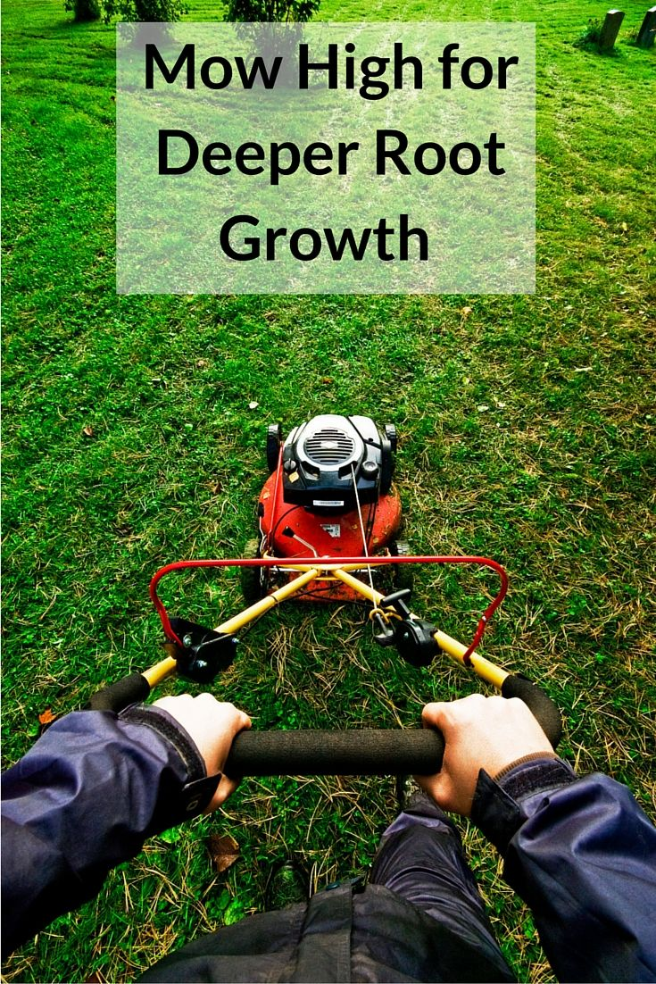Learn How Mowing High Can Benefit Your Grass Mowing High In The Summer Is Extremely Beneficial Mowing Summer Lawn Care Lawn