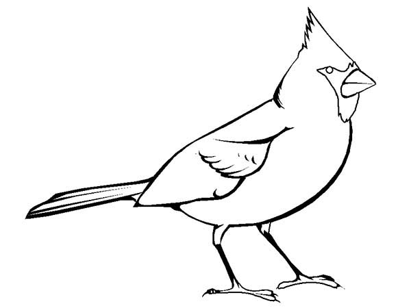 Pin On Birds Coloring Pages For Kids And Adult