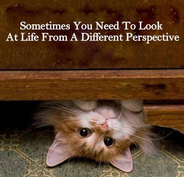 See from a different perspective.