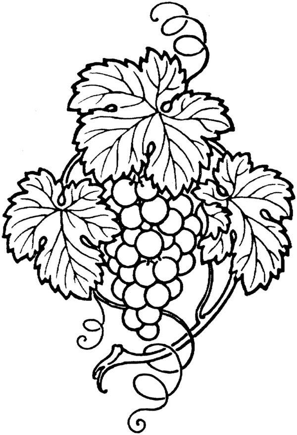Znalezione obrazy dla zapytania kiść winogron